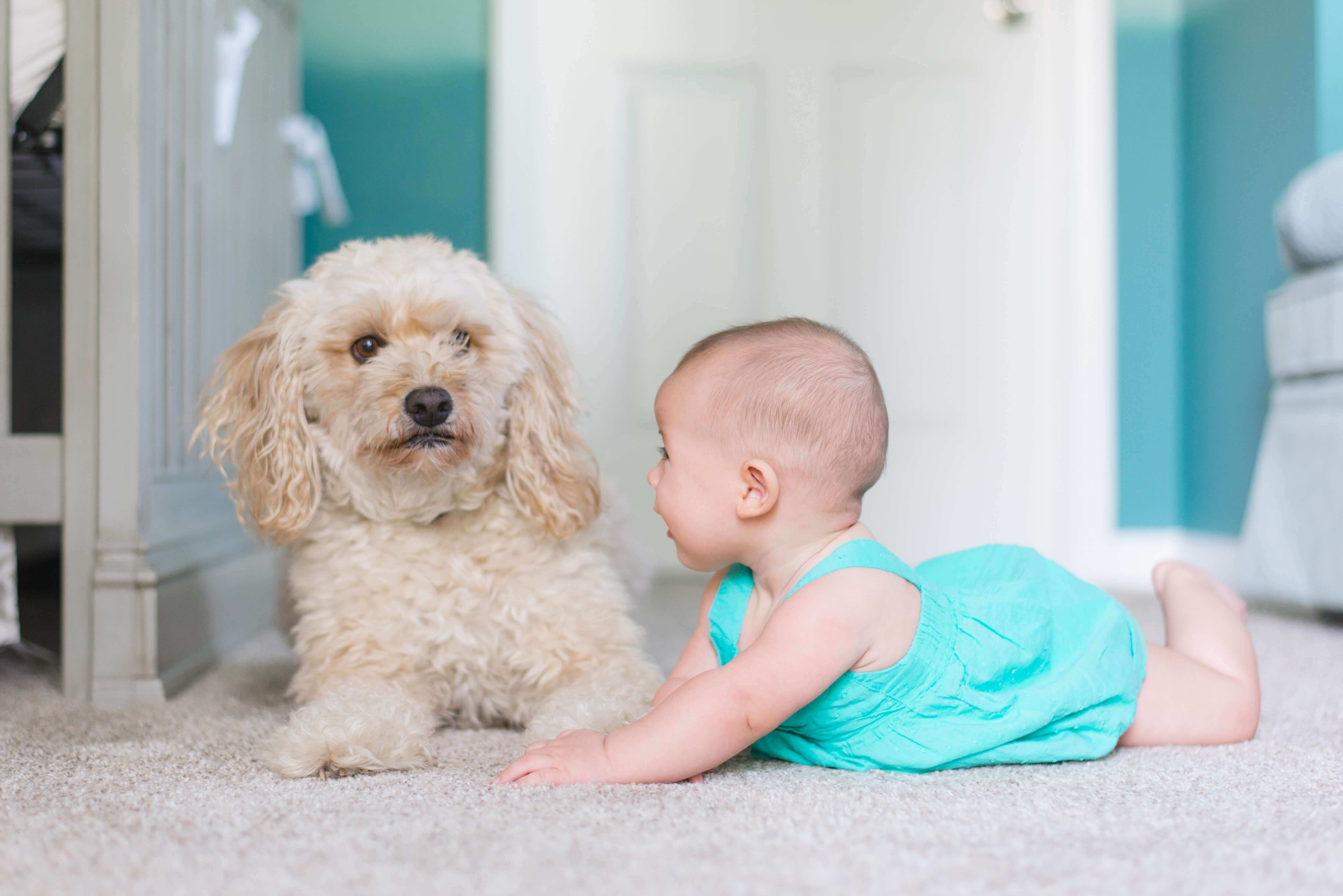 baby and dog on clean carpet