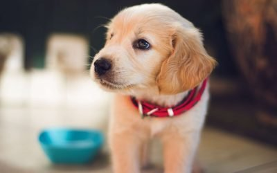Get Rid Of Pet Urine And Odors With These 4 Proven Methods
